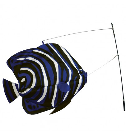 SWIMMING FISH KOREAN ANGELFISH